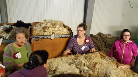 Learning about wool sorting and grading
